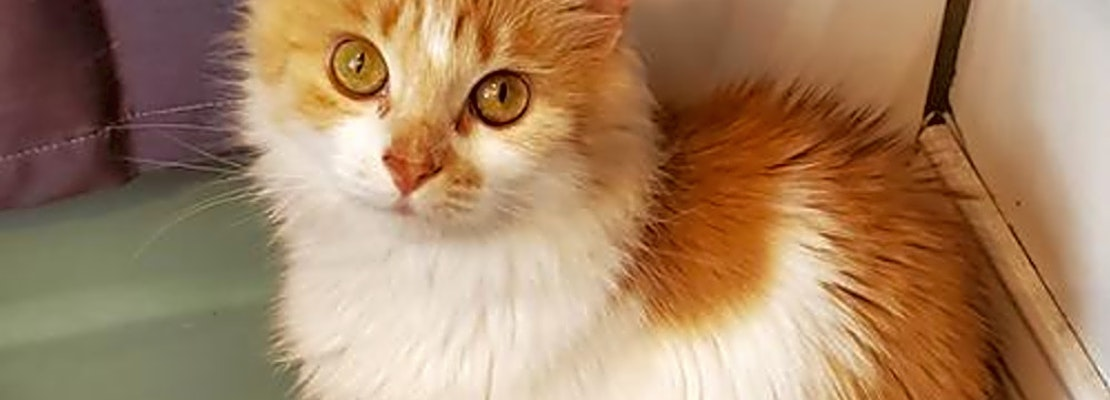 Cats in Philadelphia looking for their fur-ever homes