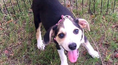 Puppies in Memphis looking for their fur-ever homes