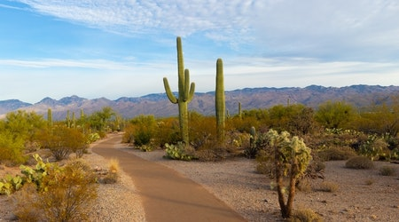 Top Tucson news: Saguaro cactus pierces driver's windshield; video shows strange lights in sky; more