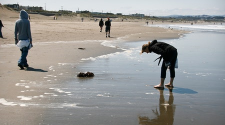 SF weekend: Ocean Beach cleanup, 'Far Out' space exhibition, SF Anime Festival, more