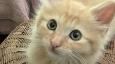Kittens in Corpus Christi looking for their fur-ever homes