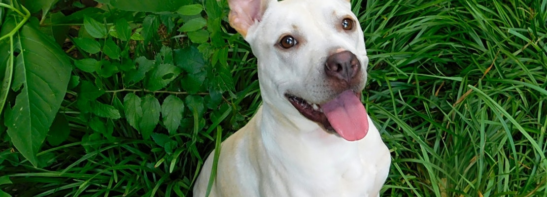 Dogs in Oklahoma City looking for their fur-ever homes