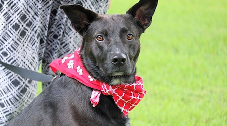 Want to adopt a pet? Here are 5 lovable pups to adopt now in Memphis