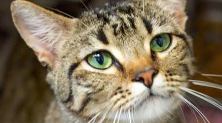 These Wichita-based felines are up for adoption and in need of a good home