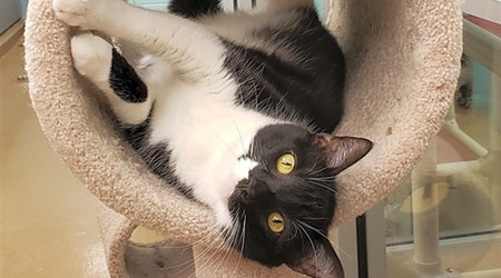 These Corpus Christi-based cats are up for adoption and in need of a good home