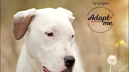 Want to adopt a pet? Here are 6 adorable pups to adopt now in Omaha