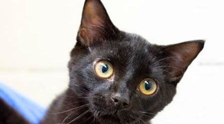 7 cute-as-can-be kittens to adopt now in Wichita