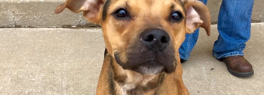 Looking to adopt a pet? Here are 5 cuddly canines to adopt now in Oklahoma City