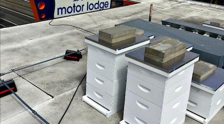 Honeymoon Sweet: Beck's Motor Lodge's Rooftop Bee Colony