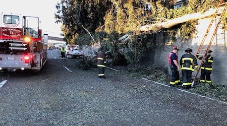 Downed Tree Blocks Lanes, Snarls Traffic On 101 & Cesar Chavez