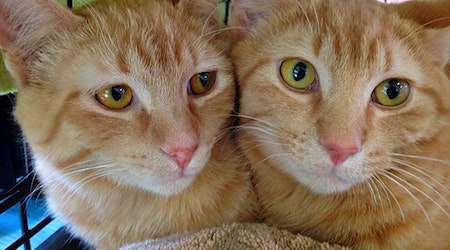 Want to adopt a pet? Here are 7 cute kitties to adopt now in Omaha