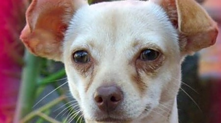 3 cuddly canines to adopt now in Riverside