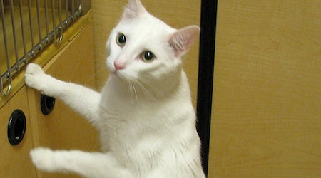Want to adopt a pet? Here are 6 lovable kitties to adopt now in Tulsa
