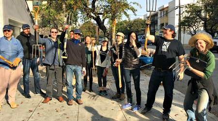 It Takes A Village To Raise An Urban Forest