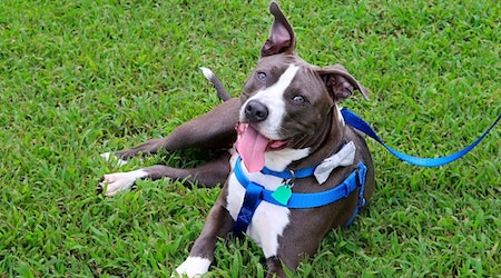 Want to adopt a pet? Here are 6 cuddly canines to adopt now in Memphis