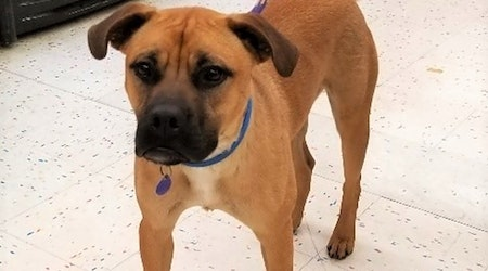 Looking to adopt a pet? Here are 7 delightful doggies to adopt now in Tulsa