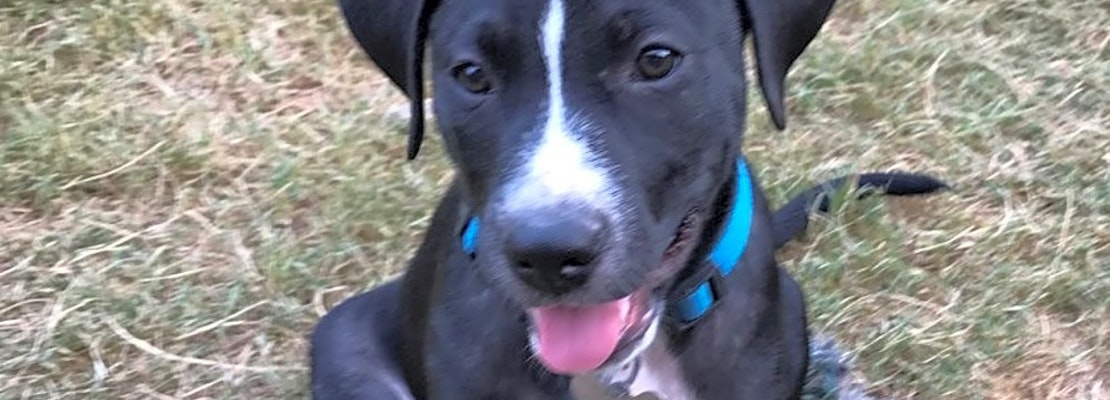 Want to adopt a pet? Here are 7 perfect pups to adopt now in Oklahoma City