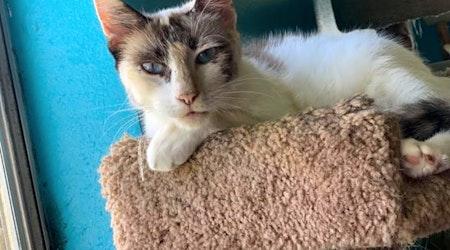 7 cool kitties to adopt now in Corpus Christi