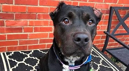 7 delightful doggies to adopt now in Wichita