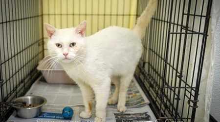 These New Orleans-based felines are up for adoption and in need of a good home
