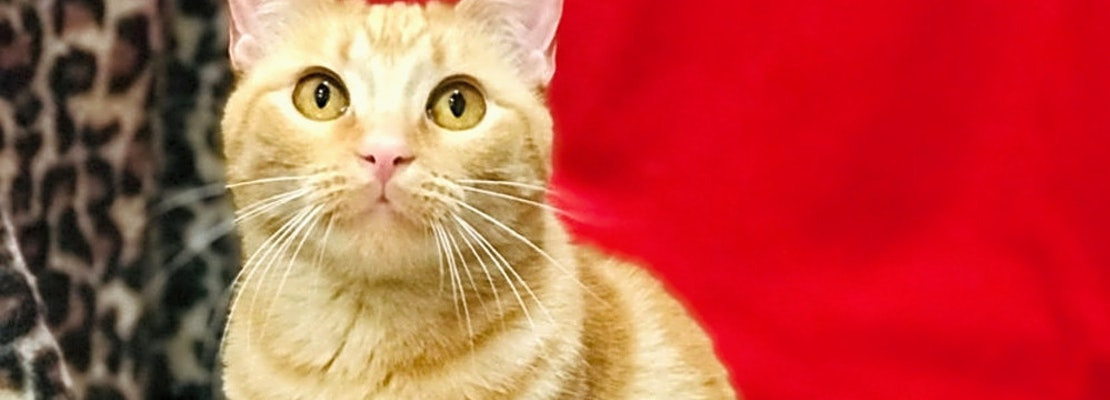 7 charming cats to adopt now in Colorado Springs
