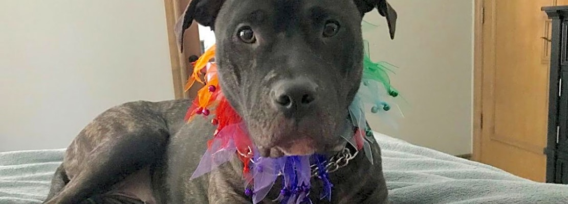 6 delightful doggies to adopt now in Oklahoma City