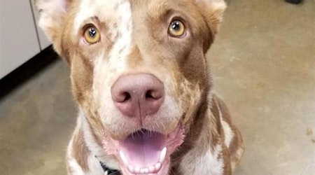 Looking to adopt a pet? Here are 5 delightful doggies to adopt now in Riverside
