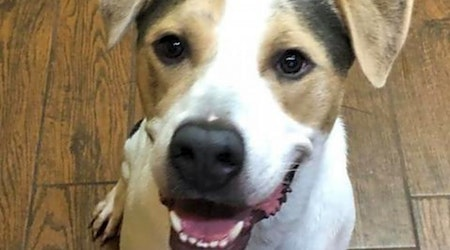 These Wichita-based dogs are up for adoption and in need of a good home