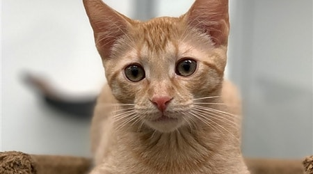 Want to adopt a pet? Here are 5 cute-as-can-be kittens to adopt now in Corpus Christi