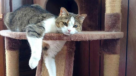 These Tucson-based felines are up for adoption and in need of a good home