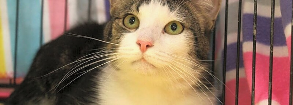 These Memphis-based kitties are up for adoption and in need of a good home