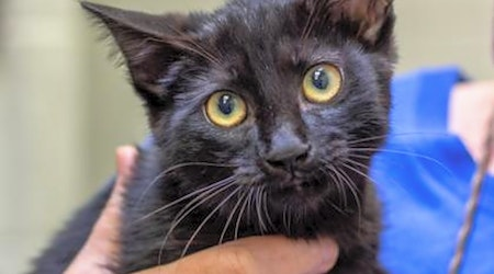 These Wichita-based kittens are up for adoption and in need of a good home