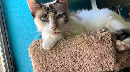 These Corpus Christi-based kitties are up for adoption and in need of a good home