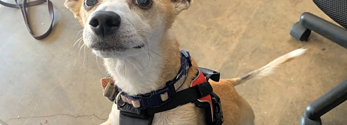 Looking to adopt a pet? Here are 5 cuddly canines to adopt now in Riverside