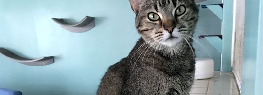 These Bakersfield-based felines are up for adoption and in need of a good home