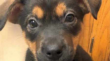 These Wichita-based puppies are up for adoption and in need of a good home