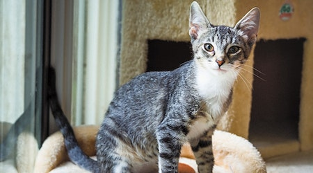 6 fluffy felines to adopt now in Tulsa