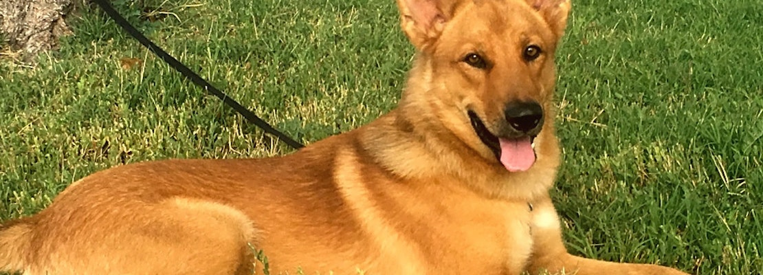 Want to adopt a pet? Here are 6 cuddly canines to adopt now in Colorado Springs