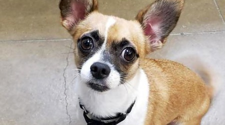5 delightful doggies to adopt now in Riverside