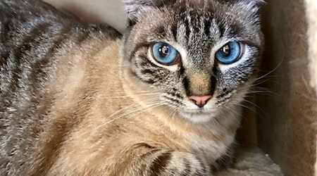 5 lovable kitties to adopt now in San Diego