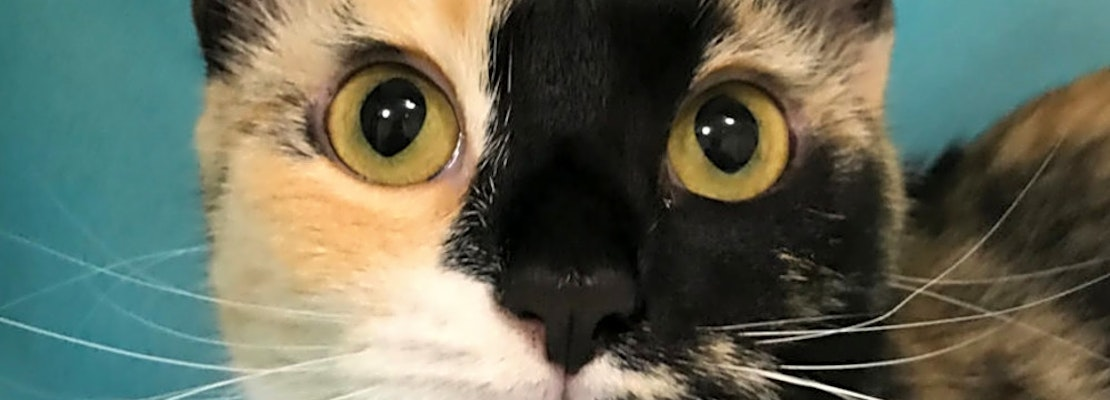 These Colorado Springs-based kitties are up for adoption and in need of a good home
