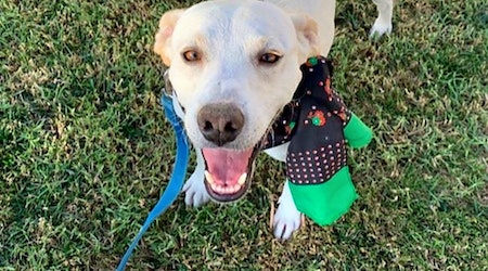 5 lovable pups to adopt now in San Diego