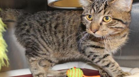 5 furry felines to adopt now in Wichita