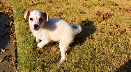 5 adorable pups to adopt now in Memphis