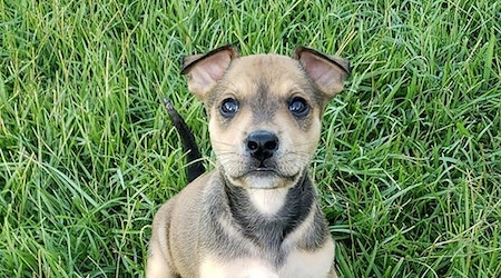 7 perfect puppies to adopt now in New Orleans