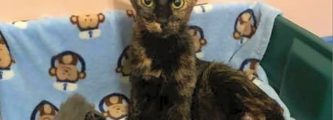 7 lovable kitties to adopt now in Wichita