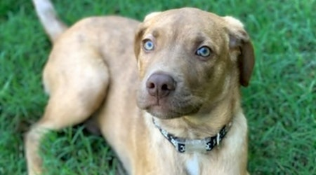 5 precious puppies to adopt now in Oklahoma City