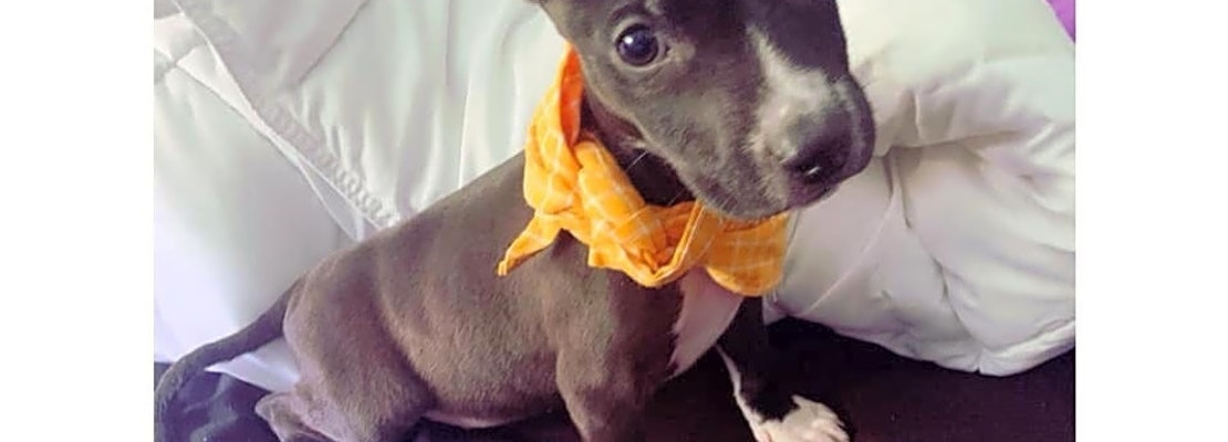 These Colorado Springs-based puppies are up for adoption and in need of a good home