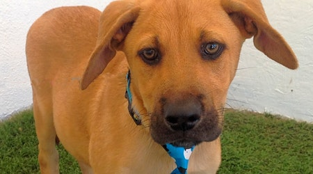 Here are 5 adorable pups to adopt in San Diego
