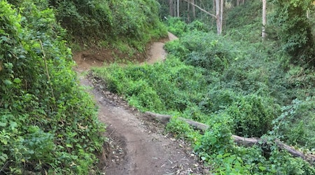 Forgotten trails behind Laguna Honda to formally re-open this weekend